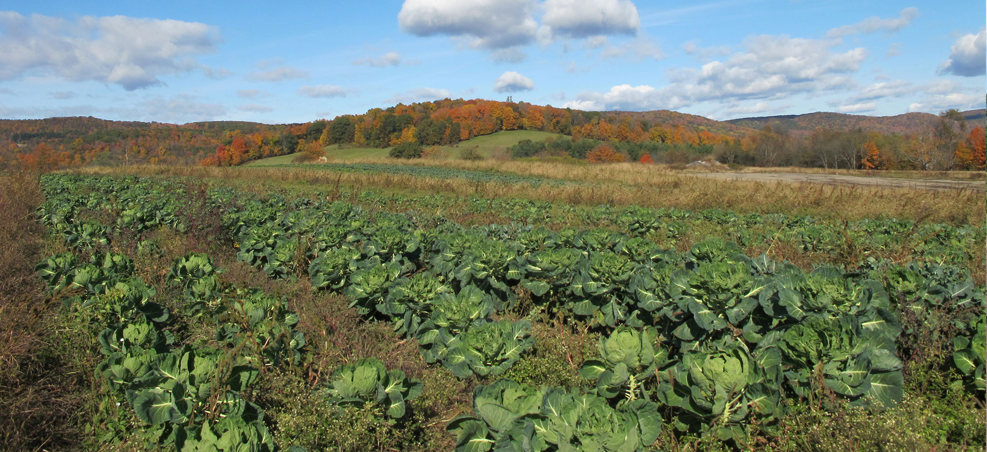 Most of Our Compost is Used on Our Own Fields