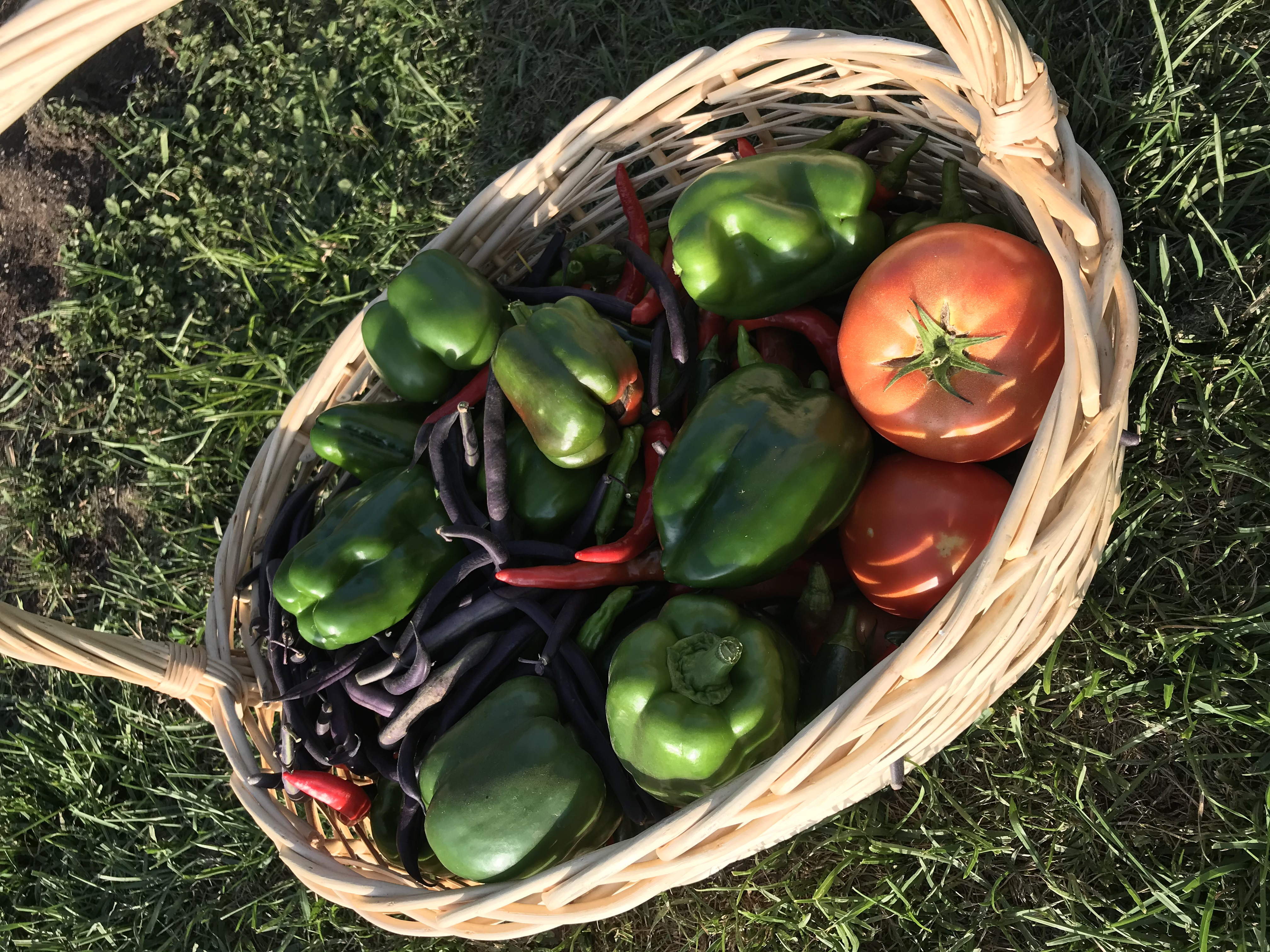 Discovery Garden produce harvested for food pantries