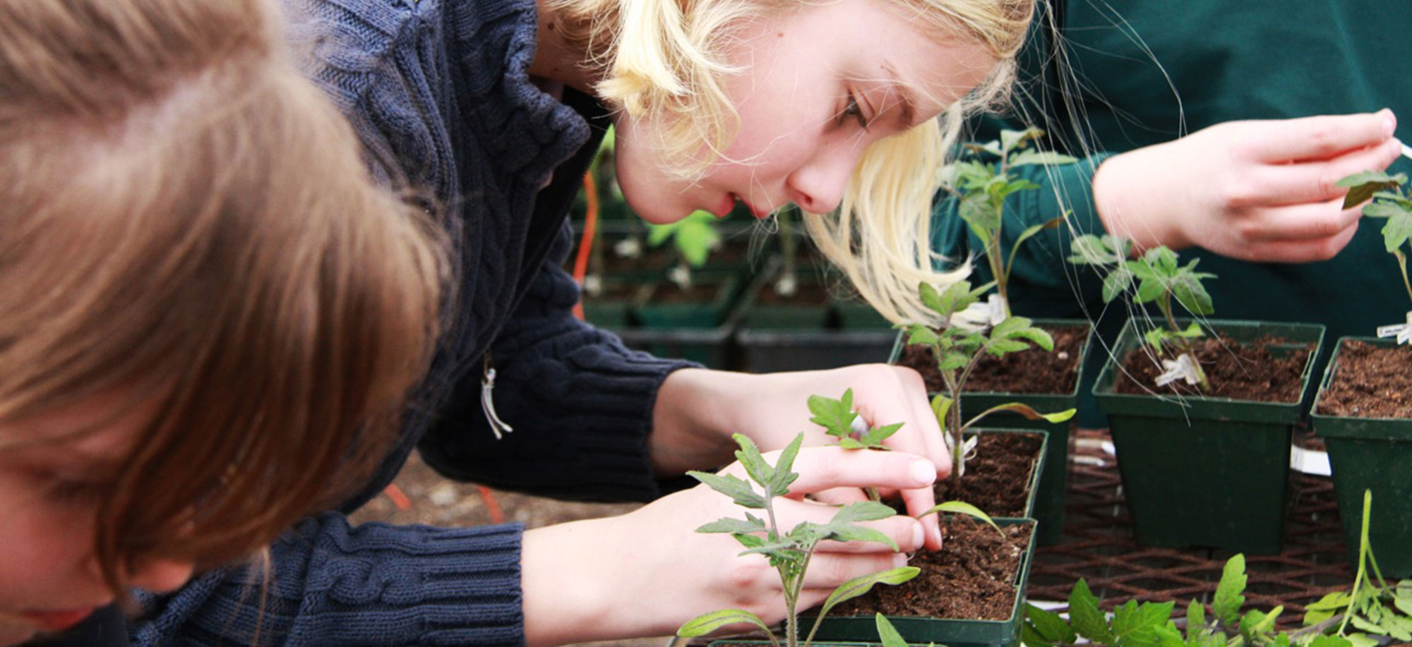 A Student Grafting Tomatoes