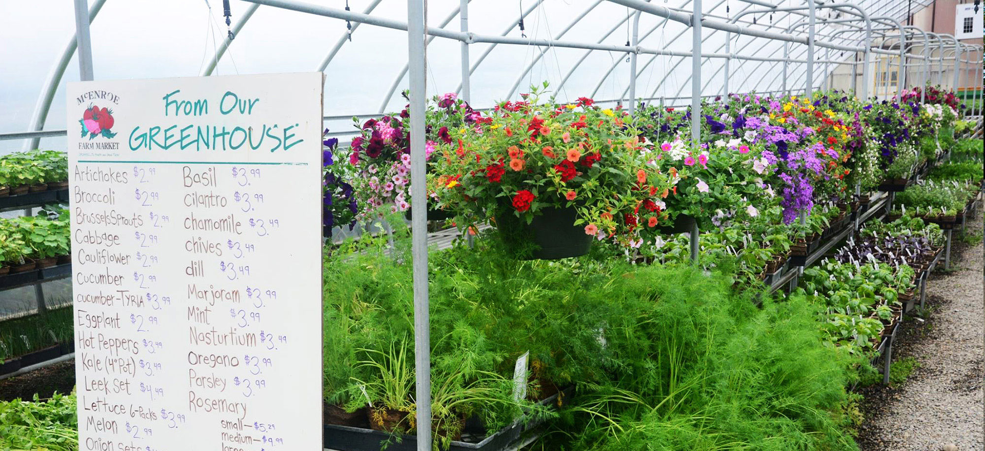 Flower Transplants Available in Late Spring and Early Summer
