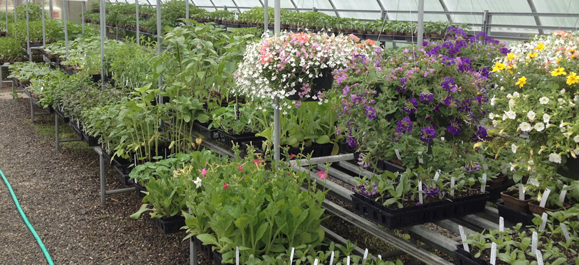 A Variety of Fresh Herb Starts are Available in the Nursery